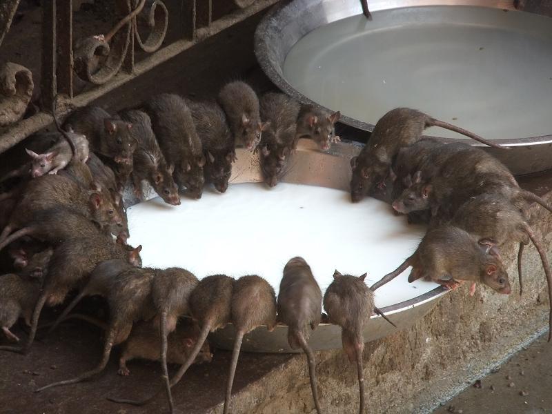 terminator mode oder ratten ratten ueberall ratten humidity strikes. Black Bedroom Furniture Sets. Home Design Ideas